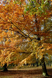 Árvore do outono. foto de stock