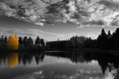 Árvore do outono Fotografia de Stock