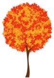 Árvore do outono Imagens de Stock Royalty Free