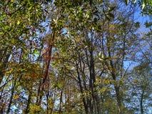 Árvore do outono Fotografia de Stock Royalty Free