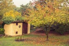 Árvore do outono com as folhas coloridas caídas na grama Foto de Stock Royalty Free