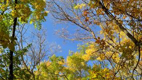 A árvore do outono coroa contra o dia ensolarado azul de céu na claro Imagens de Stock Royalty Free