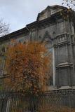 Árvore do outono de Atmosperic Fotos de Stock