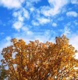 Árvore do outono do ouro Imagens de Stock