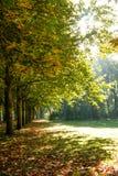 Árvore do outono na luz solar Fotografia de Stock Royalty Free