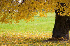 Árvore do outono no parque Foto de Stock Royalty Free