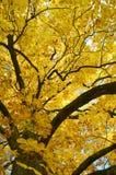 Árvore do outono no parque Fotografia de Stock Royalty Free