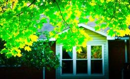 Árvore do outono no quintal Imagem de Stock Royalty Free
