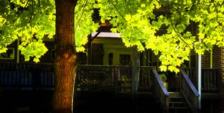 Árvore do outono no quintal Imagens de Stock Royalty Free