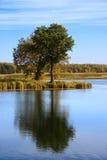 Árvore do outono refletida na água Fotografia de Stock Royalty Free