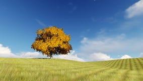 Árvore do outono um nas folhas de queda do campo ilustração do vetor