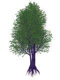 Árvore do pêssego selvagem ou do umKokoko, africana do kiggelaria - 3D rendem Imagens de Stock Royalty Free