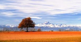 Árvore do panorama Fotografia de Stock Royalty Free