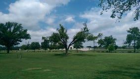 Árvore do parque imagens de stock royalty free