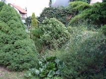Árvore do parque Imagens de Stock