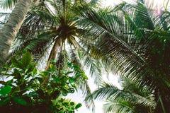 Árvore do plano e fundo do verão do céu | Férias bonitas exteriores Fotografia de Stock