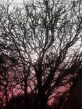 Árvore do por do sol Imagens de Stock