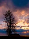 Árvore do por do sol fotografia de stock royalty free