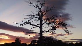 Árvore do por do sol na silhueta Imagens de Stock Royalty Free