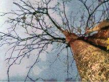 Árvore do ramo Imagens de Stock