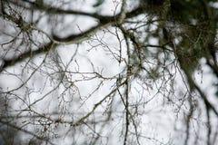 Árvore do ramo Foto de Stock