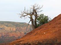 Árvore do redemoinho espiral Fotografia de Stock Royalty Free