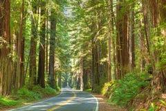 Árvore do Redwood fotos de stock royalty free