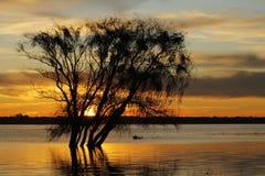 Árvore do rio de Sun Imagem de Stock Royalty Free