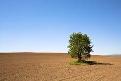 Árvore do solitário Foto de Stock Royalty Free