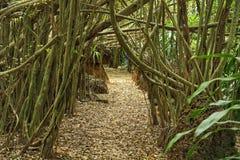 Árvore do túnel Imagem de Stock