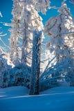 Árvore do tronco da neve do inverno Imagem de Stock