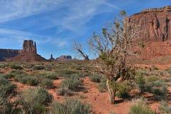 Árvore do vale do monumento fotografia de stock royalty free