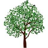 Árvore do verão Fotos de Stock