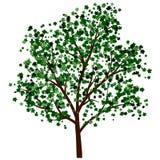 Árvore do verão Foto de Stock Royalty Free