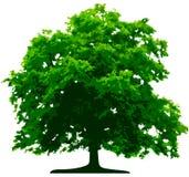 Árvore do vetor Fotografia de Stock Royalty Free