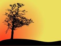 Árvore do vetor Imagens de Stock
