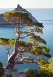 Árvore do zimbro imagem de stock