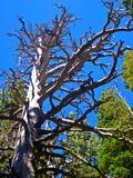 Árvore do zombi Imagem de Stock Royalty Free
