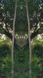 Árvore dobro Imagens de Stock Royalty Free