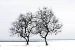 Árvore dois no campo do inverno imagem de stock royalty free
