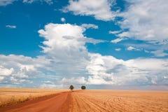 Árvore dois no campo sob o céu azul Fotografia de Stock Royalty Free