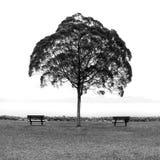 Árvore dos amantes Foto de Stock
