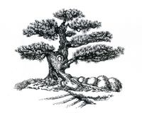 Árvore dos bonsais, tirando fotos de stock