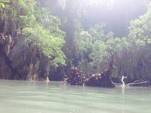Árvore dos manguezais da praia do mar de Tailândia Ásia da ilha Imagem de Stock Royalty Free