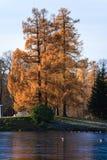 Árvore dos outonos Imagens de Stock Royalty Free