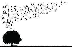Árvore dos pássaros da natureza Imagem de Stock