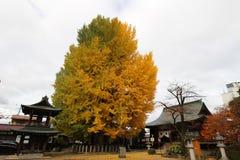 A árvore dourada fotos de stock royalty free