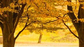 Árvore durante o outono imagens de stock