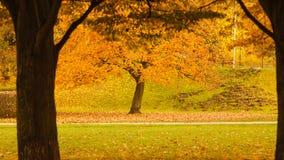 Árvore durante o outono imagem de stock royalty free