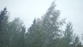 Árvore durante o vento pesado filme